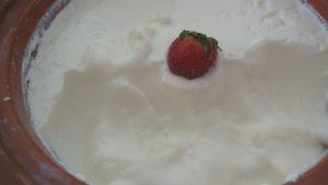 Best Yogurt Maker   Yogurt Rice